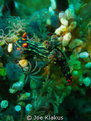 Nembrotha Garden taken on canon G10 with natural light/ by Joe Klakus 